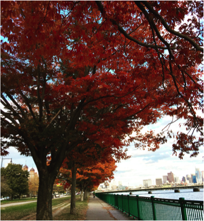 Autumn along the Charles River.